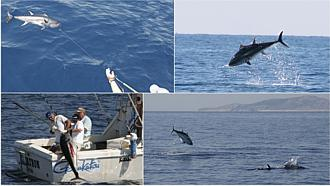 The hunting of tuna - fishing with boat Croatia