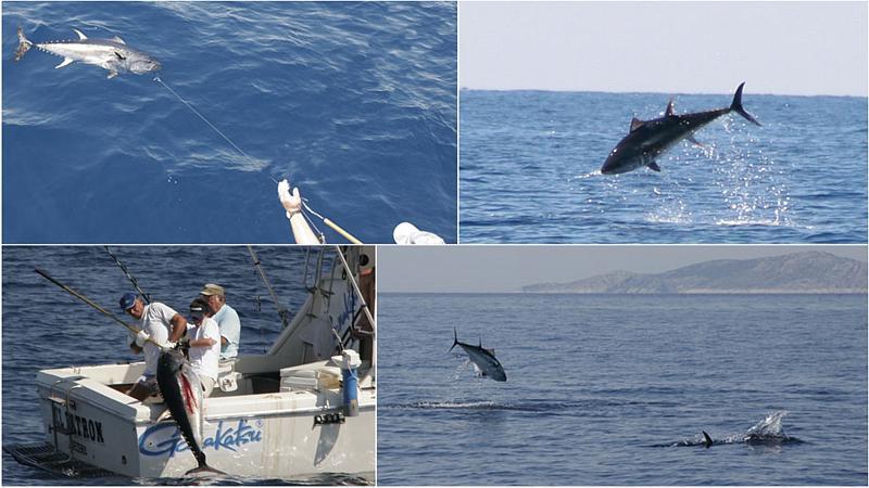 Big game fishing skippered charter for Tuna fishing games